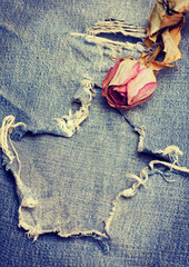 Dry rose on jeans background in vintage style