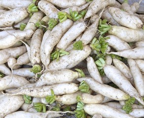 The close view of fresh white radish