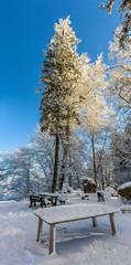 Forest on the Uetliberg mountain in Zurich - Switzerland