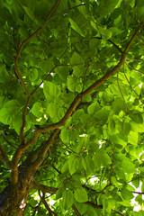 Blätterwerk eines Baumes