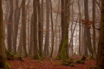 Wald im Herbst im Nebel