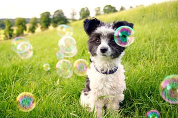 Kleiner Hund auf einer Wiese mit Seifenblasen