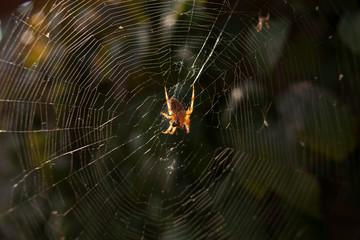 An arachnid sits in its lair.