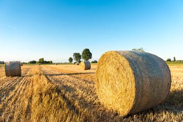 Round bales of straw