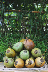 Lots of fresh green coconuts for sale on a grass background. tra