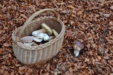 Picked mushrooms in the basket
