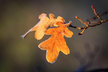 Autumn oak brunch