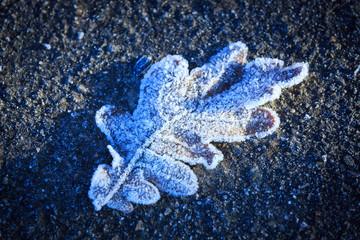 flozen leaf