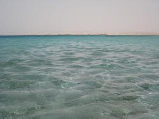 acquario naturale pieno di pesci colorati