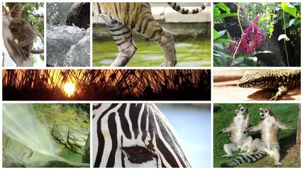 a tribute to wildlife montage