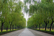 canvas print picture - Allee bei Peking
