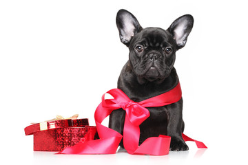French bulldog puppy in red ribbon with bow