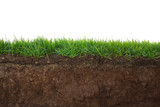 Grass and soil - 74698533
