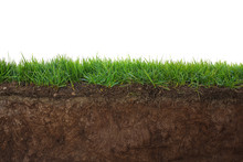 """Постер, картина, фотообои """"Grass and soil"""""""