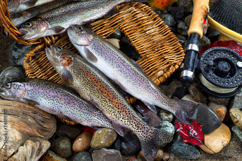 Fotobehang Vissen Trout Spilling out of Creel