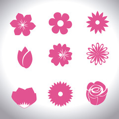 Flowers design, vector illustration.