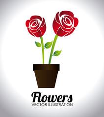 Flowers design, vector illustration.