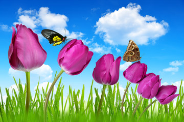 Purple tulips with dewy green grass and butterflies
