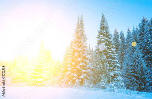 canvas print picture Trees covered with hoarfrost and snow