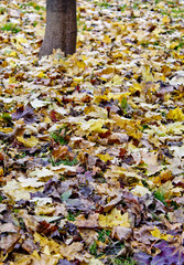 leaves in the park
