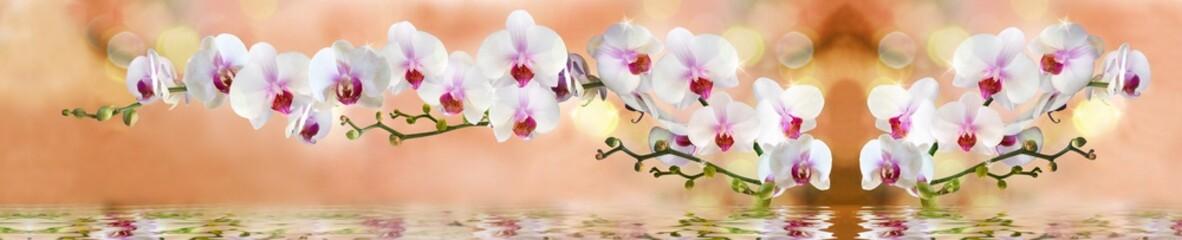 орхидеи в воде на светло бежевом фоне