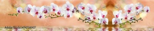 Zdjęcia na płótnie, fototapety, obrazy : орхидеи в воде на светло бежевом фоне