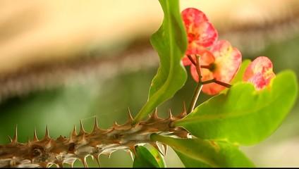 Macro succulent thorns