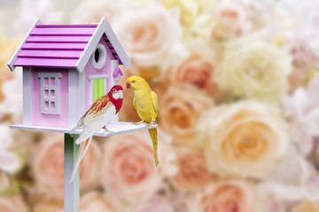bird house and parrot