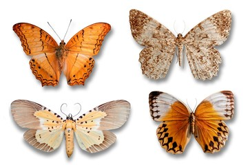 Set of butterflies, isolated on a white background
