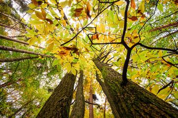Blick nach oben: Baumkronen :)