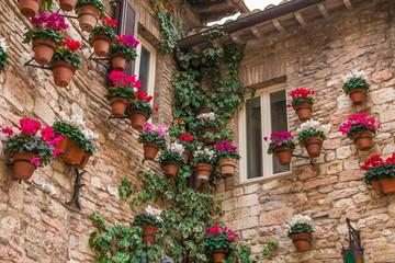 Casa di Assisi con vasi di ciclamini