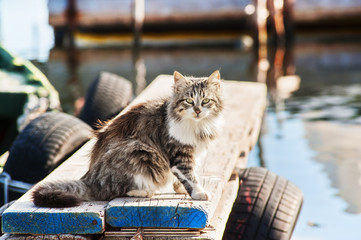 Long-haired wild cat sitting on a jetty