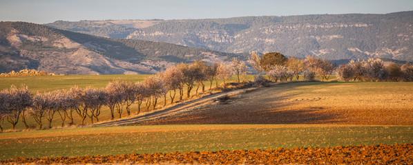 Landscape with Orange and Green Ground, Castile–La Mancha