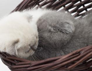 Two lovely kittens in a wicker basket