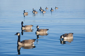 Duck Formation
