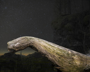 Fairytale background with tree branch and night sky.