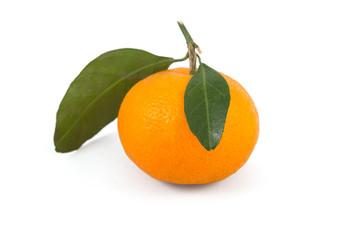 Frash tangerine on stem