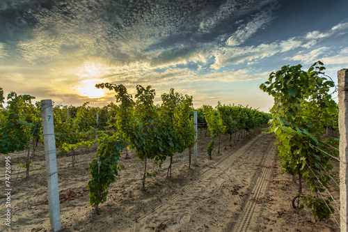 The winery yard