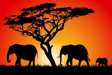 Sunset Elephant Silhouettes