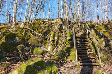 Path stairs in the woods