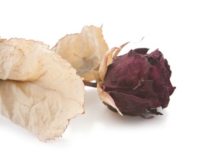rose sechée
