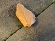Blatt auf der Strasse. Herbst