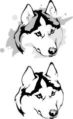 sly glance dog breed Siberian Husky