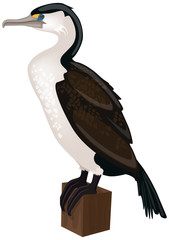 pied cormorant  perched on a wooden post - vector illustration