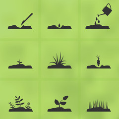 Icon set stages of how to grow a plant from seeds.