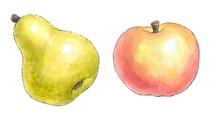 Watercolor painting of a set of fruit: pear and apple