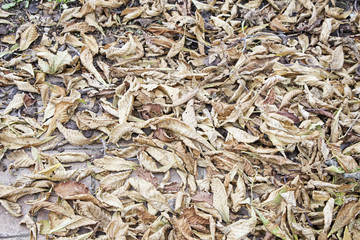 Autumn leaves piled