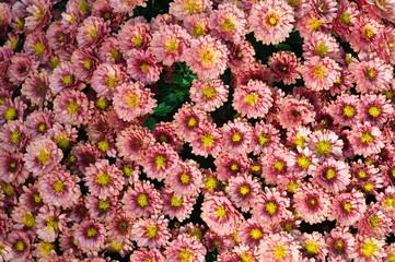 Retro Farben. Blumenstrauß.