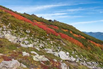 大雪山赤岳第三雪渓紅葉