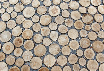 Saw cutted trees rounds laying on the ground